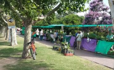 Se está desarrollando una nueva 'Feria Verde'