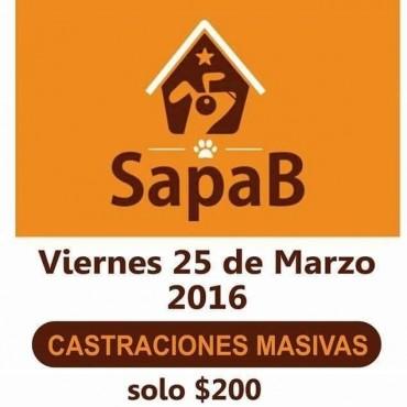 Hasta hoy miércoles hay tiempo para anotar las mascotas para las castraciones masivas de SAPAB