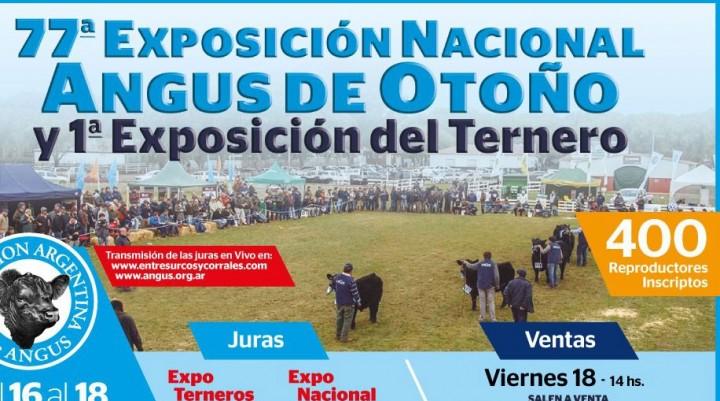 Llega la 77º Expo AnGus de Otoño