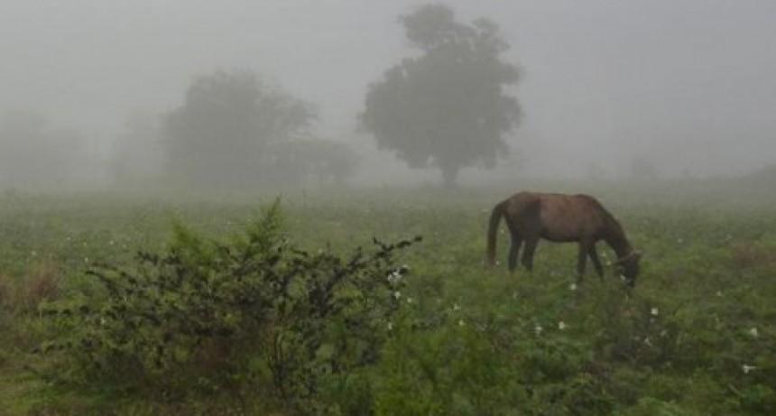 Registro de lluvias: Hasta 80 milímetros acumulados, en el partido de Bolívar