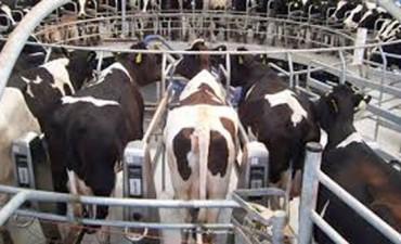 Sigue el conflicto entre los productores lecheros y la empresa La Serenísima