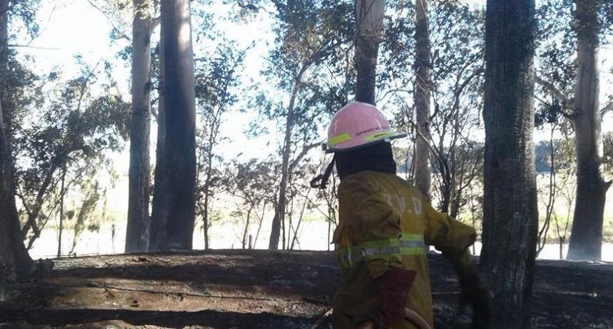 Marsiglio: Bomberos asistió al incendio de una vivienda
