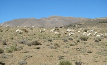 Los suelos áridos sufren por el cambio climático
