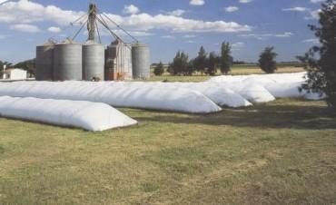 El productor retiene 16% más de soja que el año pasado
