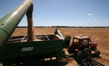 El Estado Nacional se queda con 60 de cada 100 pesos de impuestos que paga un campo agrícola