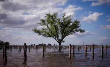 Inundaciones: hay 600.000 hectáreas productivas afectadas