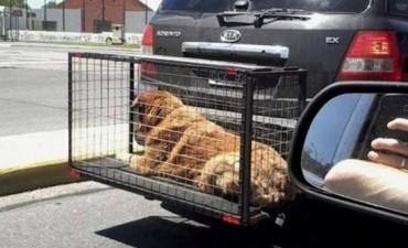 Polémica en las redes sociales por el uso de jaulas para transportar mascotas colgadas en paragolpes de autos