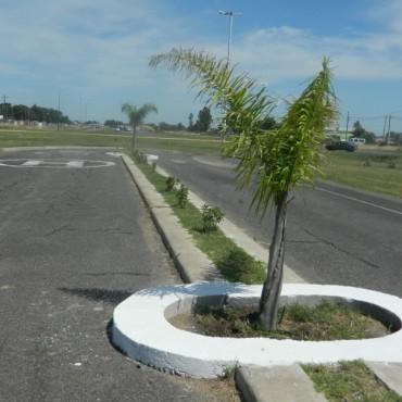 Tareas de reforestación en la rotonda y en la Terminal