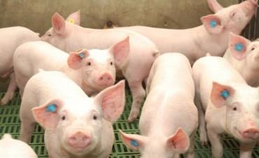 Afirman que la producción de carne de cerdo bonaerense creció 21% en 2014