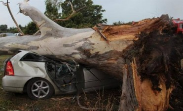 Milagro en el Polo Club de Coronel Suárez: Un árbol aplastó un auto con cuatro personas adentro