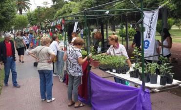Desde este fin de semana, todos los sábados habrá 'Feria Verde'