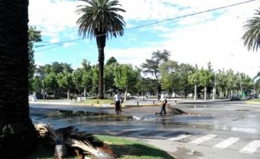 Luego del viento: La Municipalidad recorrió las calles juntando ramas caídas