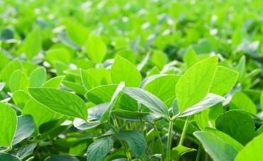 La soja trepó 2,2% a u$s 392,89, su mayor valor en seis meses