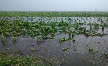 Por las inundaciones, hay 290 mil hectáreas de maíz en riesgo