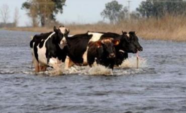 La industria estima que luego de las inundaciones caerá la producción de leche un 20 por ciento