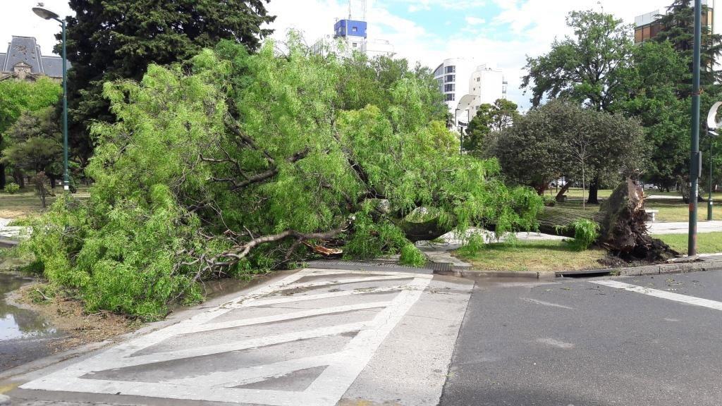 Tres Arroyos: Saldo que dejo el temporal en la ciudad