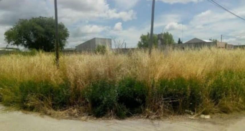 Olavarría: multas de más de 80 mil pesos a los propietarios de terrenos con falta de mantenimiento