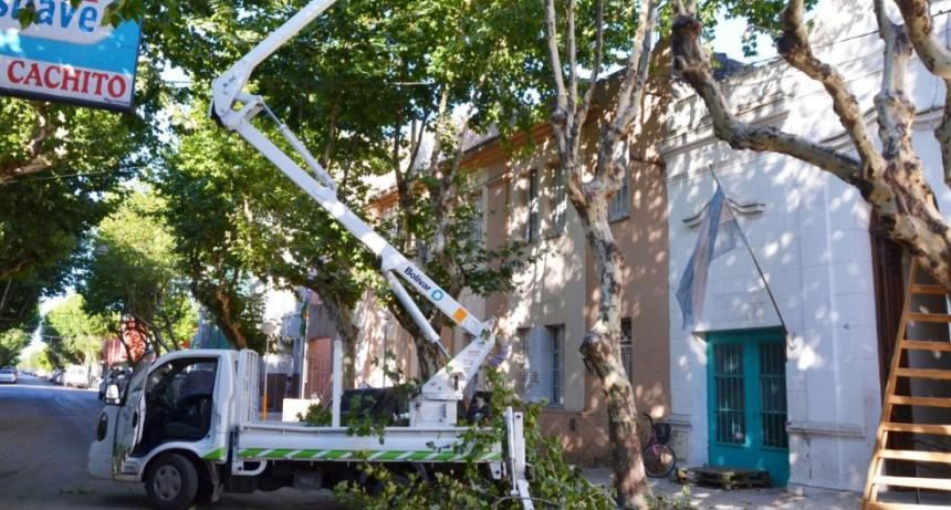 Se realizó una poda excepcional en calle Arenales