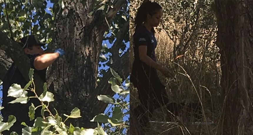 Oficial: Bazán se arrojó desde un árbol a siete metros de altura