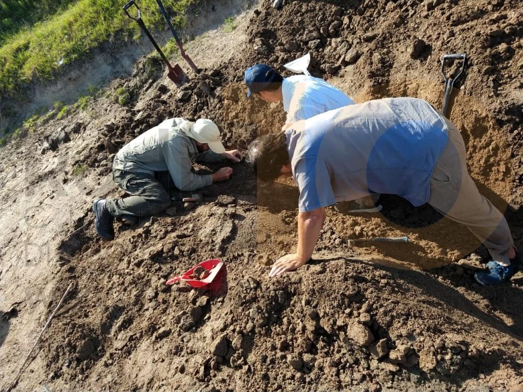 Podrían ser más de dos los gliptodontes hallados