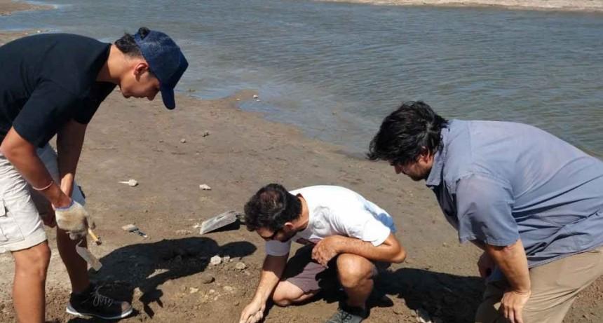 La municipalidad trabaja con el INCUAPA en la preservación de los fósiles hallados en el Arroyo Vallimanca