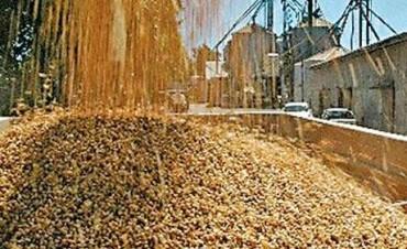 Lentamente continúa la cosecha de soja en la Argentina