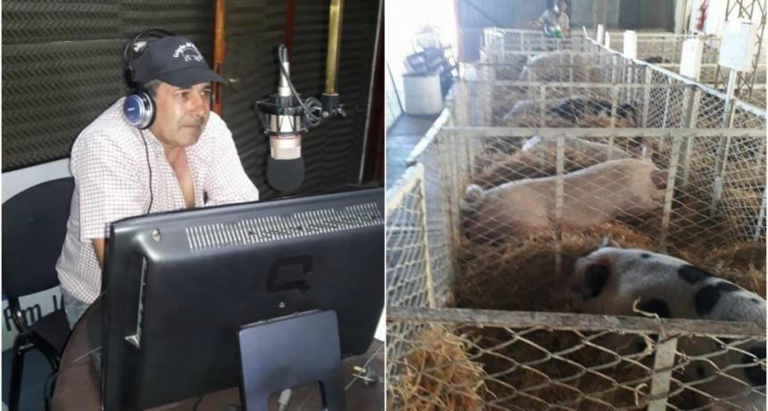 Gran Remate de 100 porcinos de la cabaña 'El Rebaño'