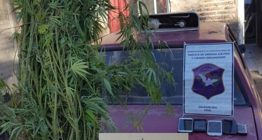 Parte de prensa oficial de Comisaría local: Se realizó la incautación de planta de marihuana y cigarrillos armados