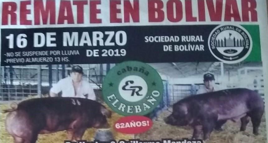 Gran remate reproductores porcinos en la Sociedad Rural