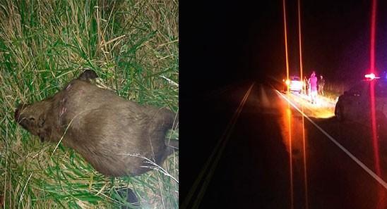 Ruta 226: Un despiste a la mañana y un capincho a la noche