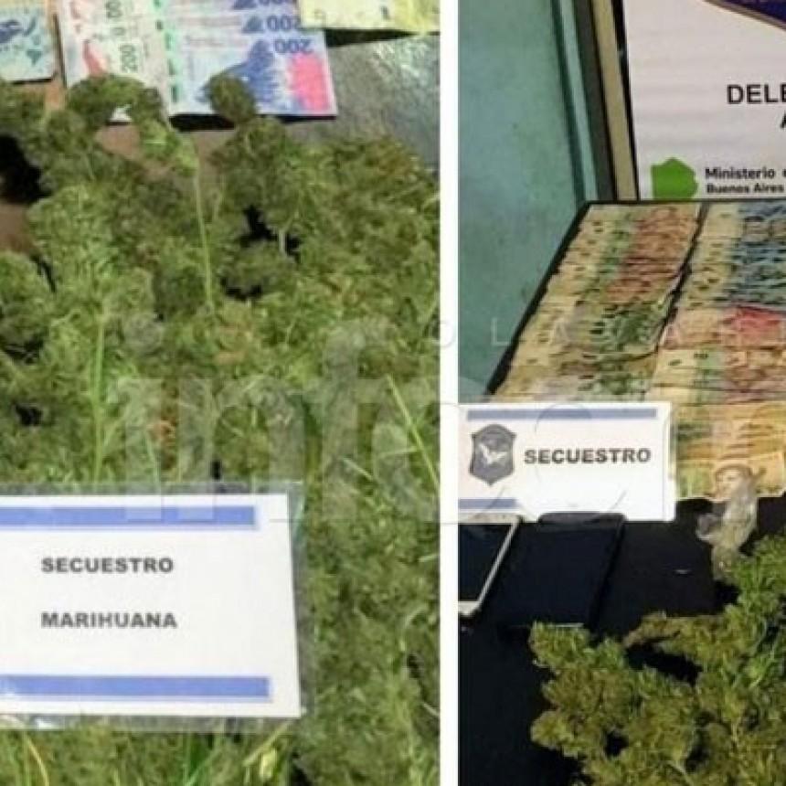 Olavarría: Dos aprehendidos tras allanamientos y secuestro de marihuana y dinero en efectivo