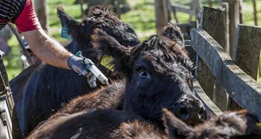 Nueva prórroga en el plazo para la vacunación contra la Fiebre Aftosa