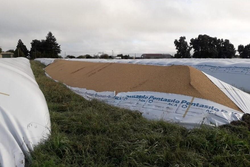 En la Cooperativa Agropecuaria, entraron a la planta y rompieron tres silobolsas de trigo de 200 toneladas cada uno y uno de soja de 180 toneladas