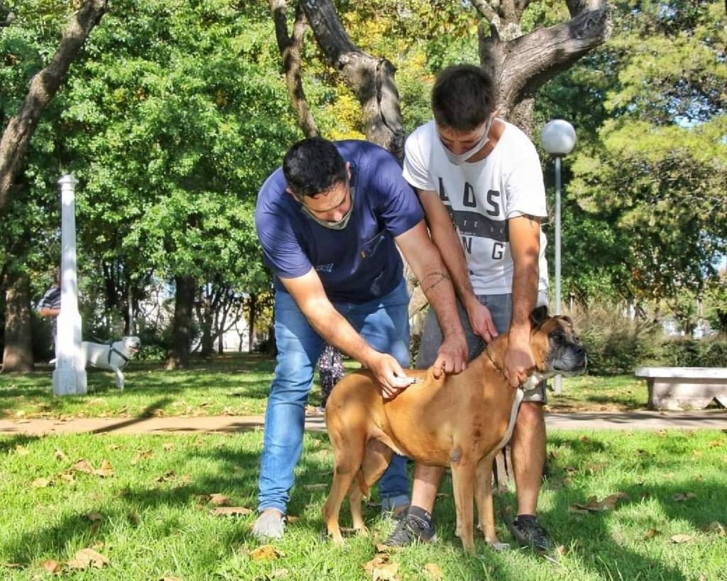 Tenencia responsable, una campaña de la Dirección de Zoonósis