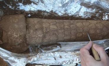 Hallan un ejemplar de gliptodonte en la laguna Epecuén