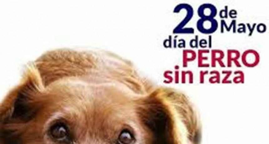 28 de mayo; Día del perro sin raza