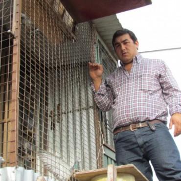 """Colombofília: """"Alas bolivarenses"""" tiene su personería jurídica"""