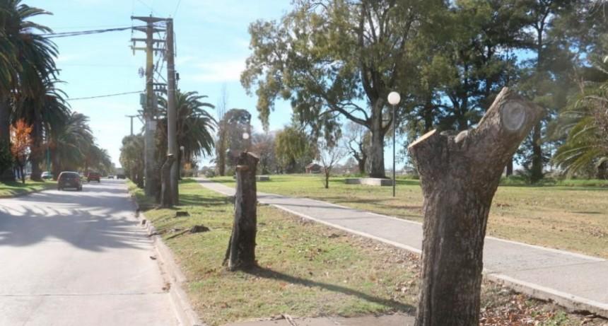 Se están reponiendo árboles secos en la avenida 25 de mayo