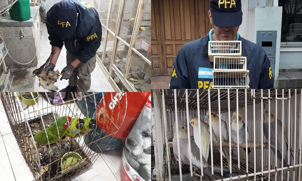 Vendían especies de aves protegidas vía Facebook