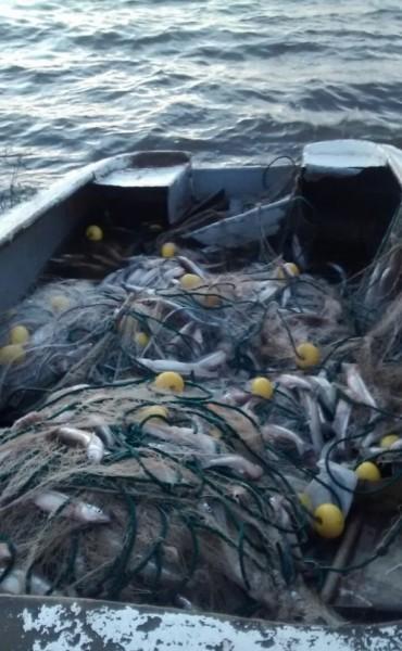 Operativo de pesca clandestina en la localidad de Trenque Lauquen
