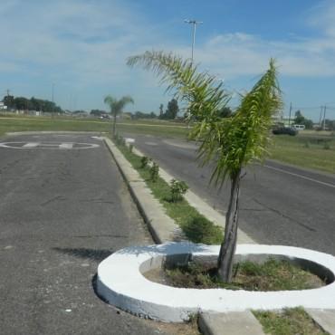 Bolívar recibirá cinco mil plantines para reforestar la ciudad