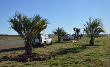 Se realiza un trabajo de forestación en diversos espacios verdes