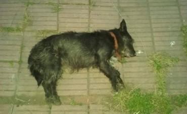 Una médica veterinaria contó qué hacer ante una situación de envenenamiento