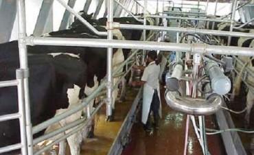 Crisis de la lechería: Los tamberos denuncian una situación terminal del sector