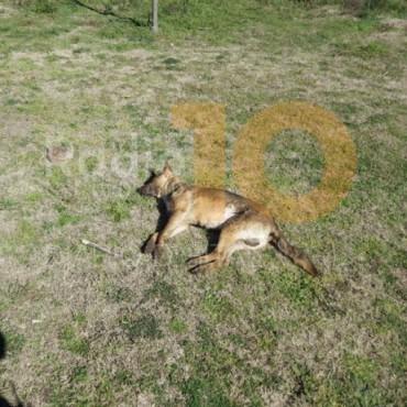 Ahora: Hallan en Bolívar por lo menos cuatros perros envenenados