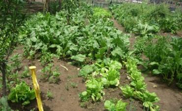 La Secretaría de Asuntos Agrarios recorrió huertas locales