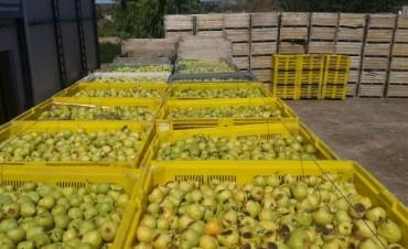 Peras y manzanas: por qué regalarán 10.000 kilos de fruta en Plaza de Mayo