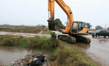 Drenajes de la ciudad: Con maquinarias sacaron el animal que obstruía el canal