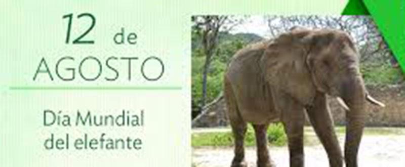 Día Mundial del Elefante
