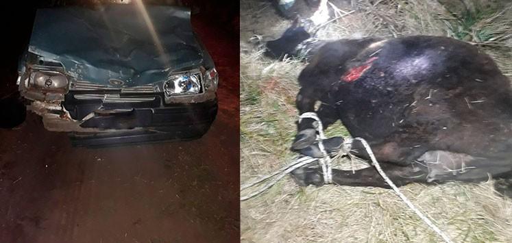 Transitaban por un camino rural a bordo de su auto y colisionaron con un animal vacuno